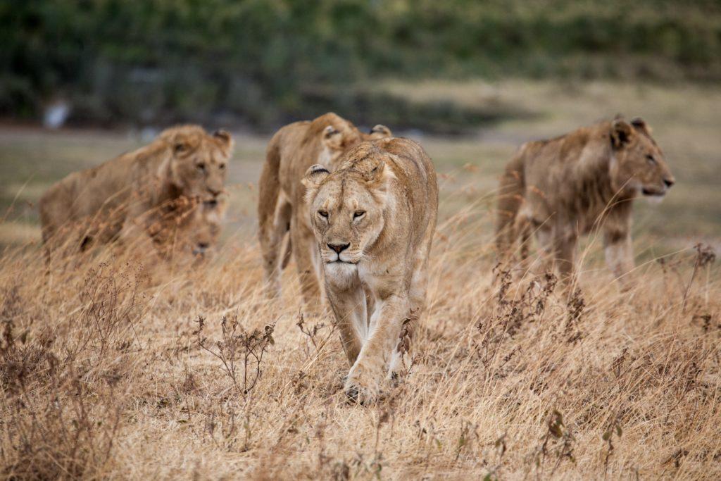 Ngorongoro Africa Picnic